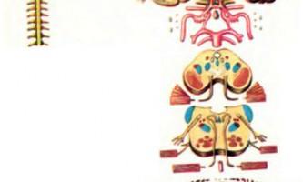 Анатомічні зображення - абсцес скроневої частки, абсцес мозочка, геморагічний поліоенцефаліт - діагностика нервових хвороб