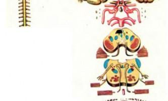 Анатомічні зображення - пінеалома, хромофобная аденома - діагностика нервових хвороб