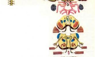 Анатомічні зображення - тромбоз синуса, тромбоз середньої мозкової артерії, емболія задньої мозкової артерії - діагностика нервових хвороб