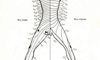 Анатомічний рівень ураження - діагностика нервових хвороб