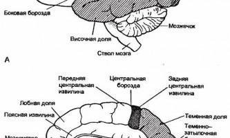 Анатомія нервової системи - нервові хвороби
