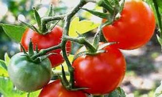 Страви з помідорів