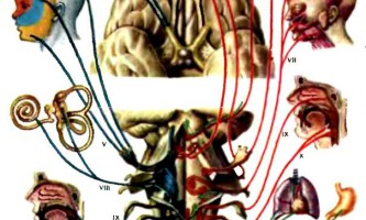 Черепні нерви - дитяча неврологія
