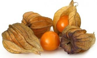 Фізаліс: корисні властивості та особливості цієї рослини