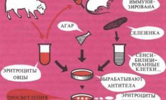 Хімічні канцерогени мають імунодепресивними властивостями - рак: експерименти і гіпотези