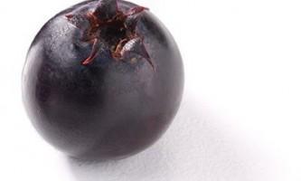 Ірга: корисні властивості та протипоказання цієї заморської ягоди