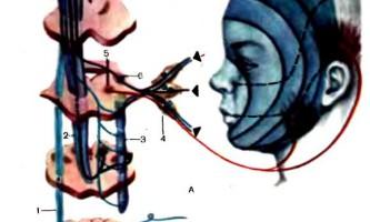 Дослідження функції окорухових нервів - дитяча неврологія