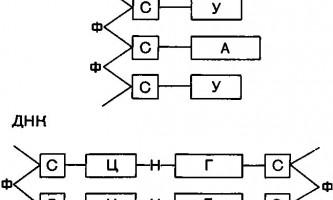 Ядро - основи гістології