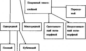 Епітеліальна тканина - основи гістології