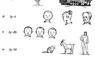 Категорії сприйняття в окремих анализаторах - інтеграційна діяльність мозку