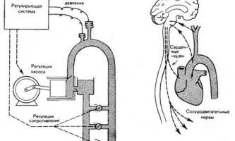 Компенсаторні механізми тиску - динаміка серцево-судинної системи