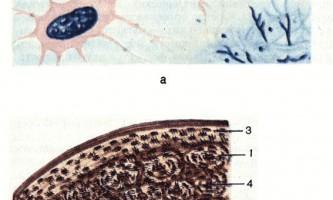 Кісткова тканина - основи гістології