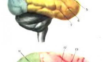Короткі відомості з анатомії нервової системи - дитяча неврологія