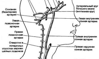 Кровопостачання головного та спинного мозку - нервові хвороби