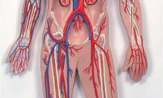 Лікування серцево-судинних захворювань