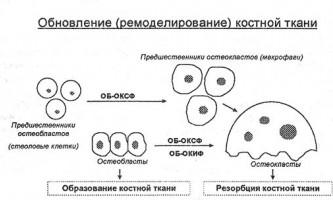 Лікарські засоби, що впливають на обмін кальцію і фосфору