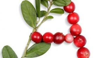 Листя брусниці: лікувальні властивості, застосування і приготування ліків з цього інгредієнта