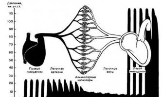 Мале коло кровообігу - динаміка серцево-судинної системи