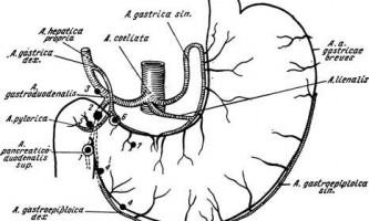 Масивні кровотечі при хворобах шлунка і дванадцятипалої кишки - гострі захворювання органів черевної порожнини