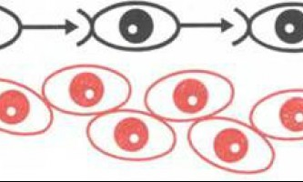 Мембрани регулюють ріст клітин - рак: експерименти і гіпотези