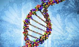 Мутації в одній з хромосом можуть знизити рівень інтелекту