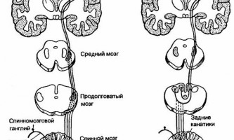 Порушення чутливості - нервові хвороби
