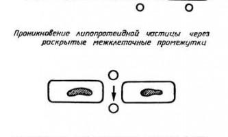 Спадкові дефекти транспорту ліпідів - атеросклероз і шляхи його профілактики