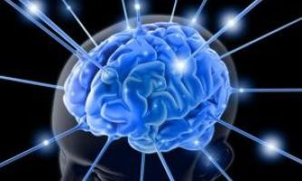 Виявлено взаємозв`язок між нейронами голоду і компульсивним поведінкою