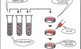 Пухлинні днк-віруси в культурі тканини - рак: експерименти і гіпотези