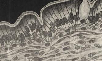 Основи гістології
