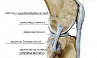 Передня зв`язка головки малогомілкової кістки.