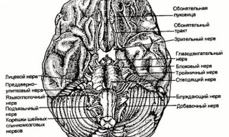Периферична нервова система - нервові хвороби