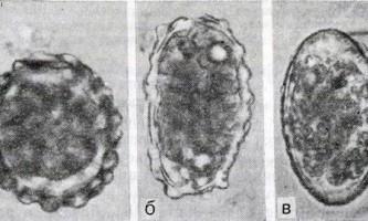 Гельмінтози - інфекційні захворювання у дітей