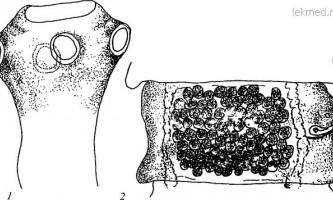 Raillietina goura - давенеати - raillietina