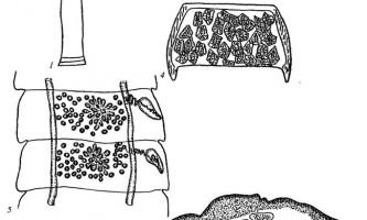 Raillietina multicapsulata - давенеати - raillietina