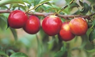 Рецепти з яблуками