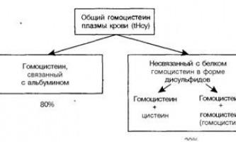 Роль гіпергомоцистеїнемії у розвитку атеросклерозу - патоморфологія і патогенез атеросклерозу