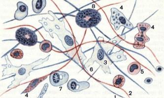 Ще не зцементована неоформлене сполучна тканина - основи гістології