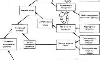 Системне артеріальний тиск - динаміка серцево-судинної системи