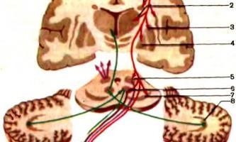 Стриопаллидарная система - дитяча неврологія