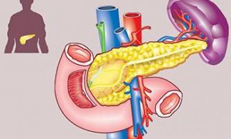 Будова залоз підшлункової залози - анатомія і функціональний пристрій