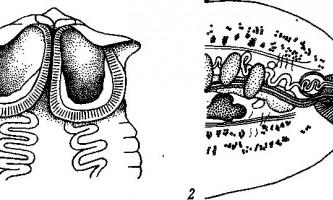 Tetrabothrius forsteri - тетработріати і мезоцестоідати