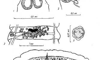Tetrabothrius jagerskioldi nybelin - тетработріати і мезоцестоідати