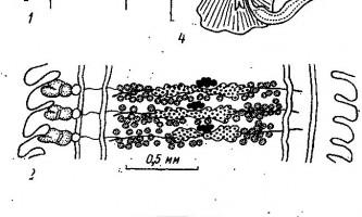 Tetrabothrius mawsoni johnston і morschtini muravijova - тетработріати і мезоцестоідати