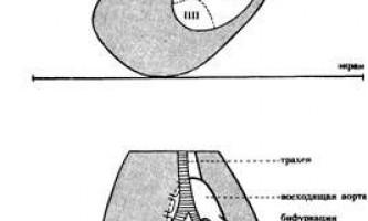 Топографія нормального серця - клінічна кардіологія ч.2