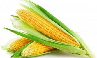 Варена кукурудза: користь і шкода цього продукту харчування