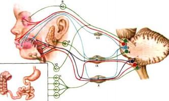 Вестибулярний нерв - дитяча неврологія