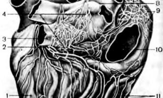 Внутрішньосерцевий нервовий апарат - клінічна анатомія серця