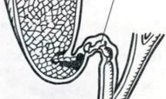 Жовчний міхур - системи організму (гістологія)